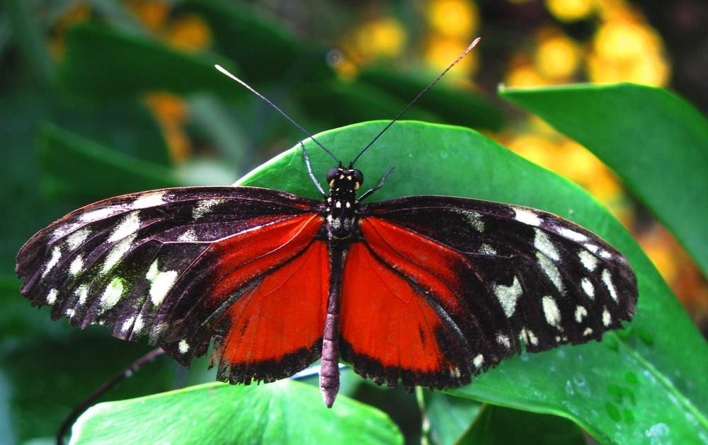Welche schönen Schmetterlinge es doch gibt!