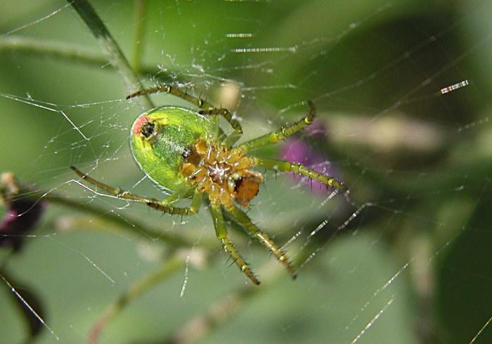 Welche Spinne ist das?