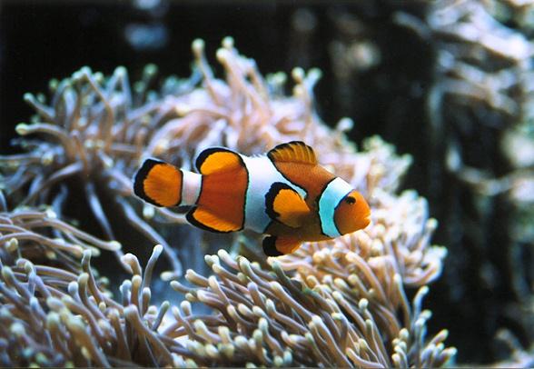 Welche Version ist besser und was für´n Fisch ist das?