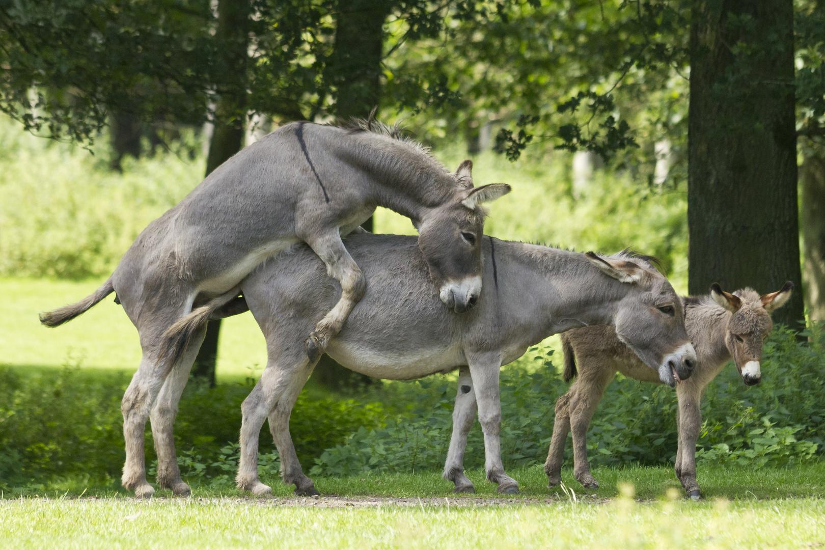 Welcher Esel lässt den seine Kinder zusehen:-) Foto & Bild