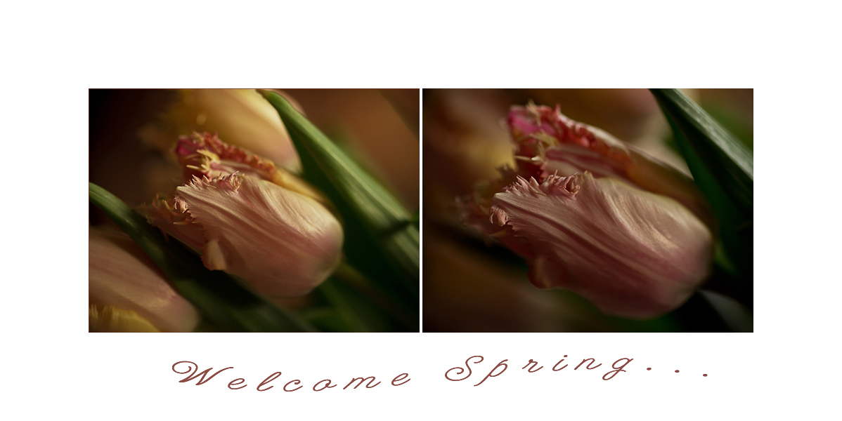 Welcome spring.....