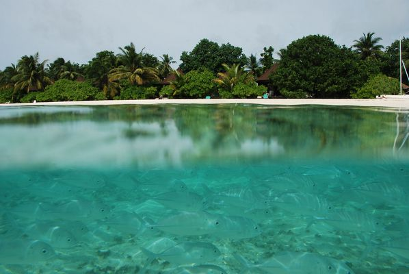 """* Welcome to paradise (Malediven, maledives) """""""