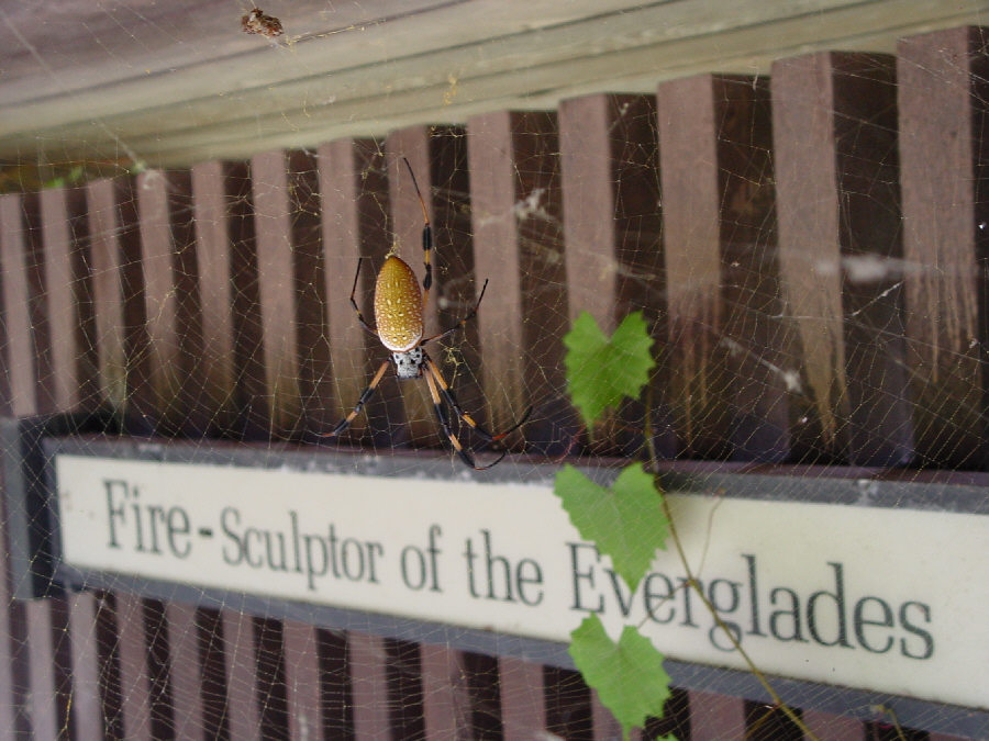 Welcome to the Everglades