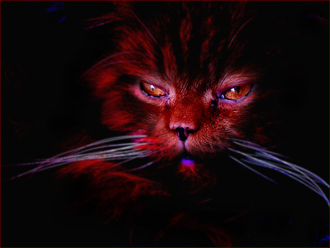 welcome to the hell - miau