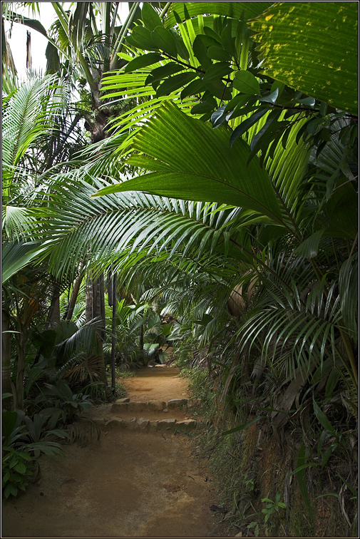 Welcome to the jungle...
