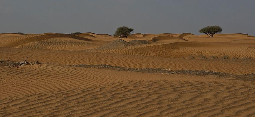 Wellen im Sandmeer
