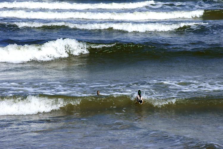 Wellen reiten [Fotohaiku]