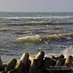 Wellen und Möwen gehören zusammen