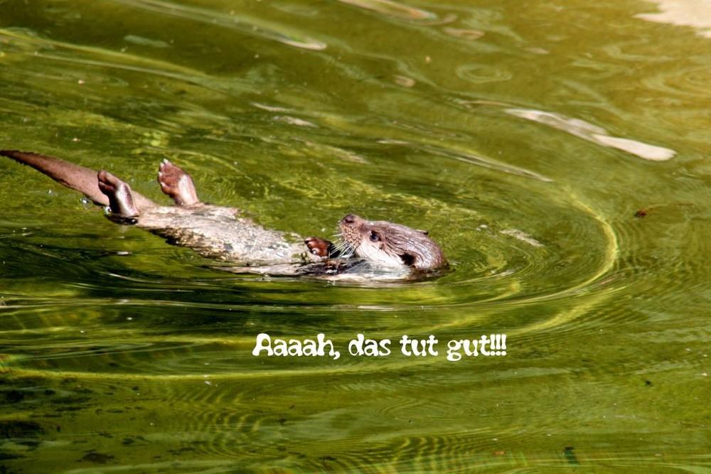 Wellness für gestresste Otter