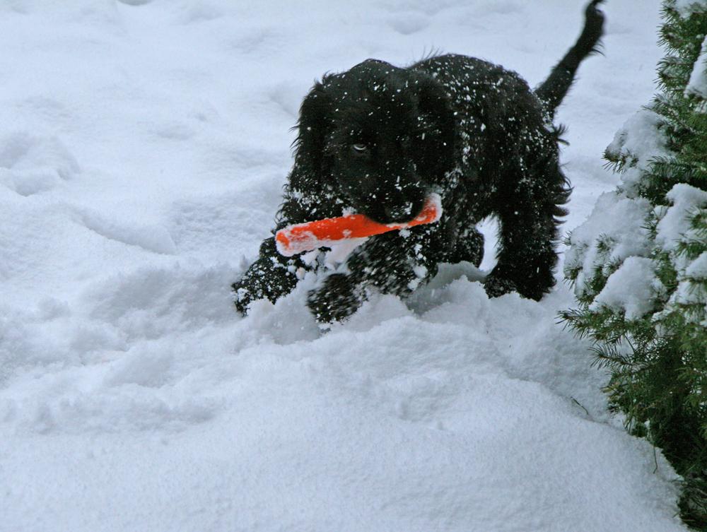 Welpe entpuppt sich als wilder Schneehase :-)