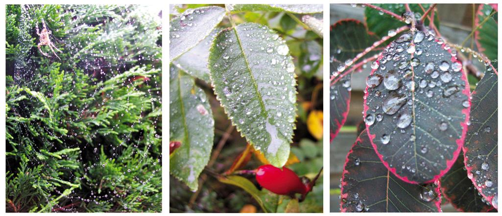 Welt der Regentropfen