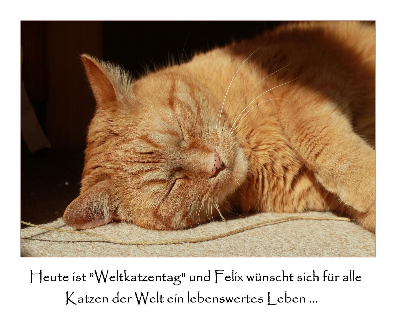 Weltkatzentag 08.08.2010 ...