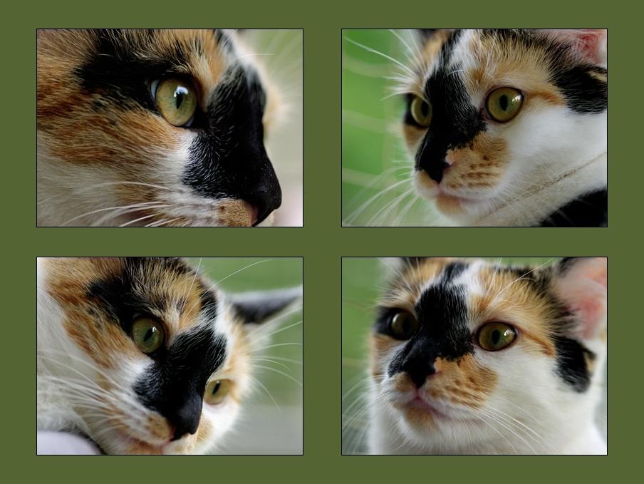 Weltkatzentagsgesichter