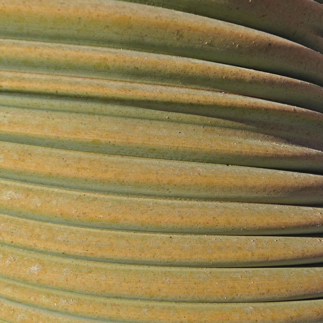 Welwitschia - Natürliche Strukturen (11)