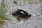 Wem gehört diese Sandalette im Boisdorfer See??