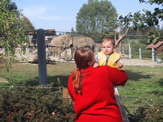 Wen interessieren schon Elefanten!