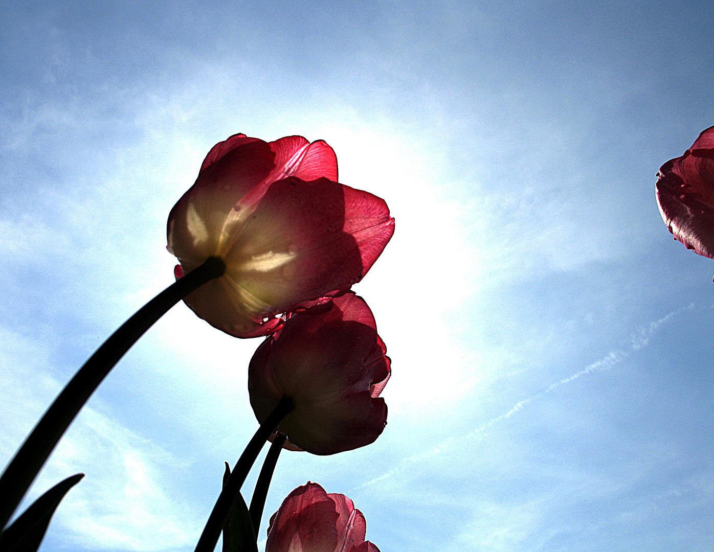 wenigstens etwas Frühling...........