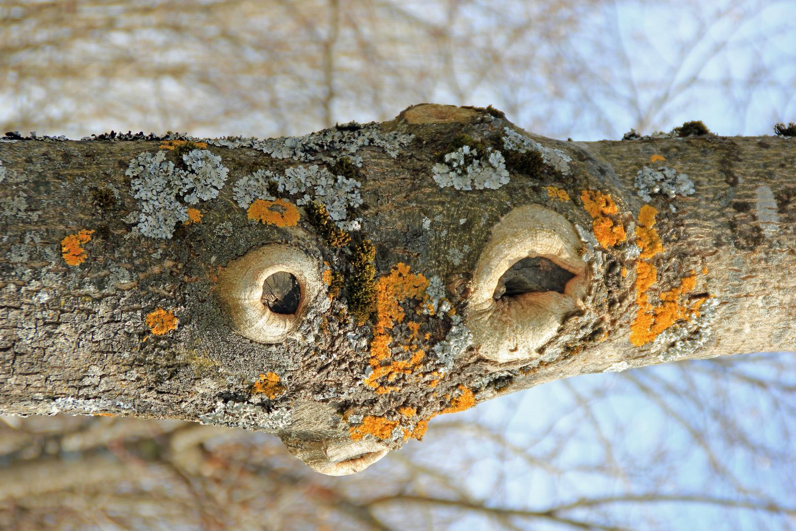 Wenn Bäume Gesichter haben, beobachten sie uns? :=)