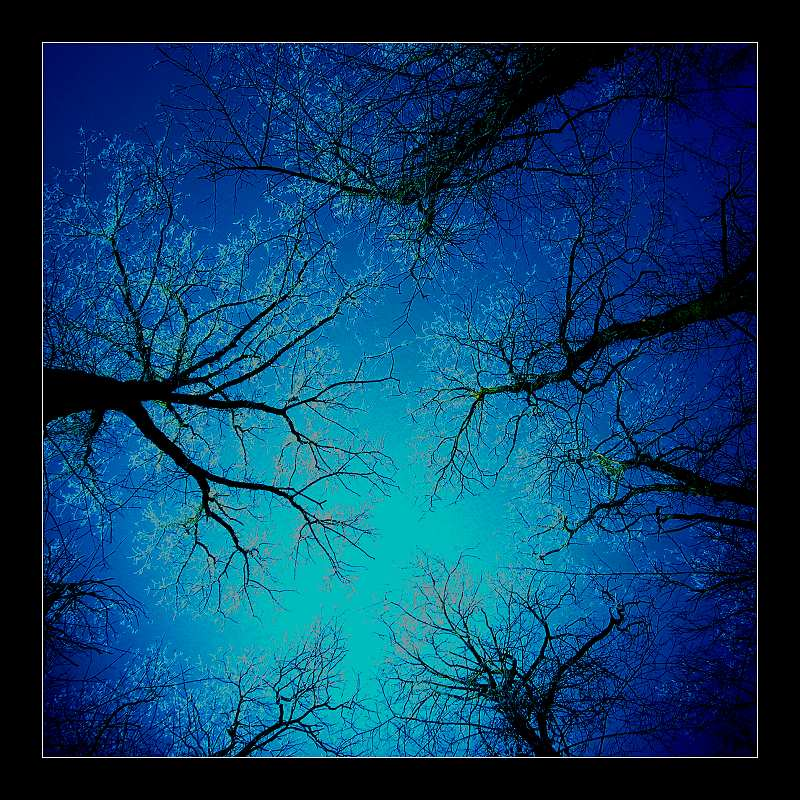 wenn bäume in den himmel wachsen
