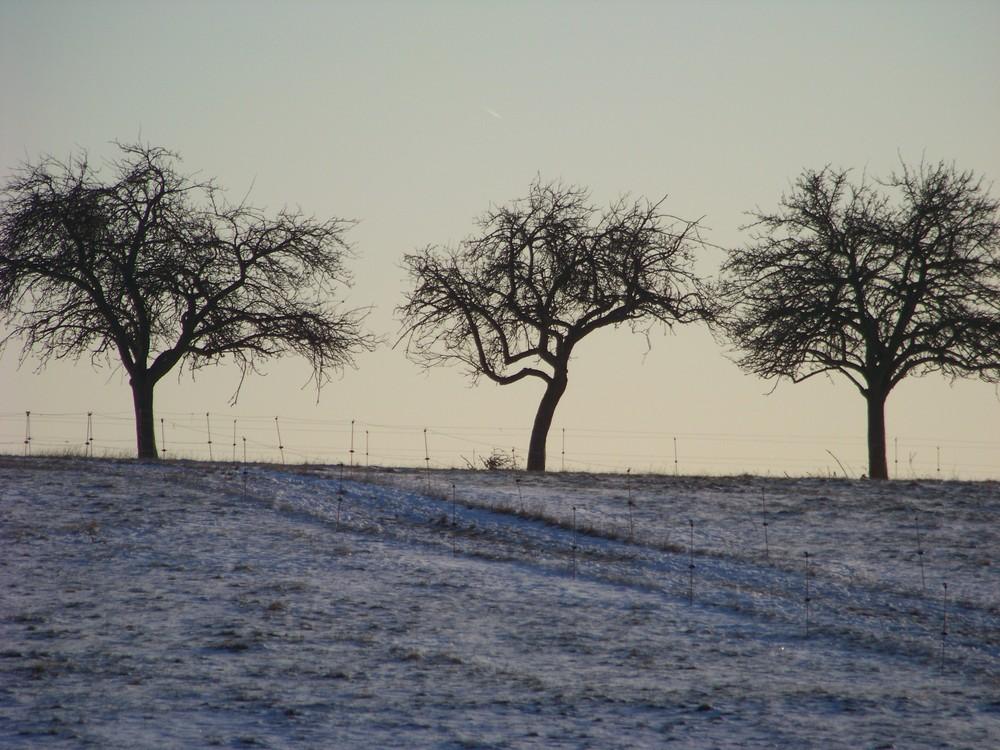 Wenn Bäume tanzen könnten