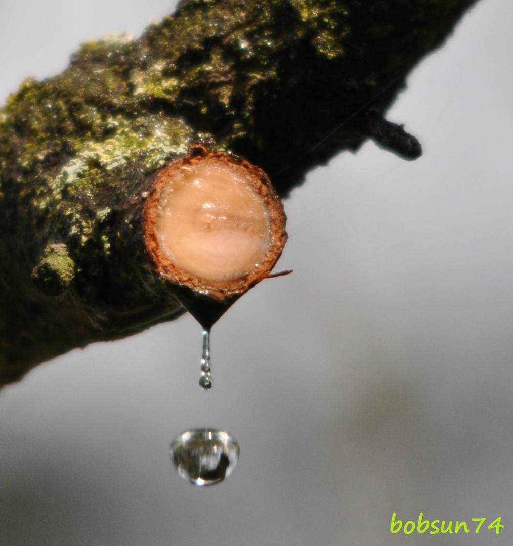 Wenn Bäume weinen