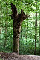 Wenn Bäume zu sprechen beginnen....