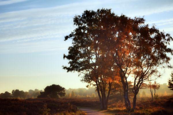 Wenn Birken träumen