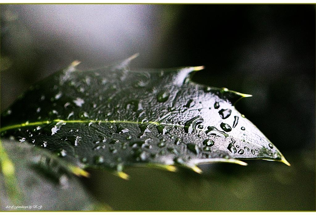 wenn Blätter weinen...