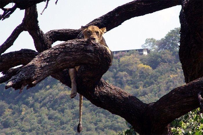 Wenn Blicke töten könnten ! (Tansania/Juni 2003)