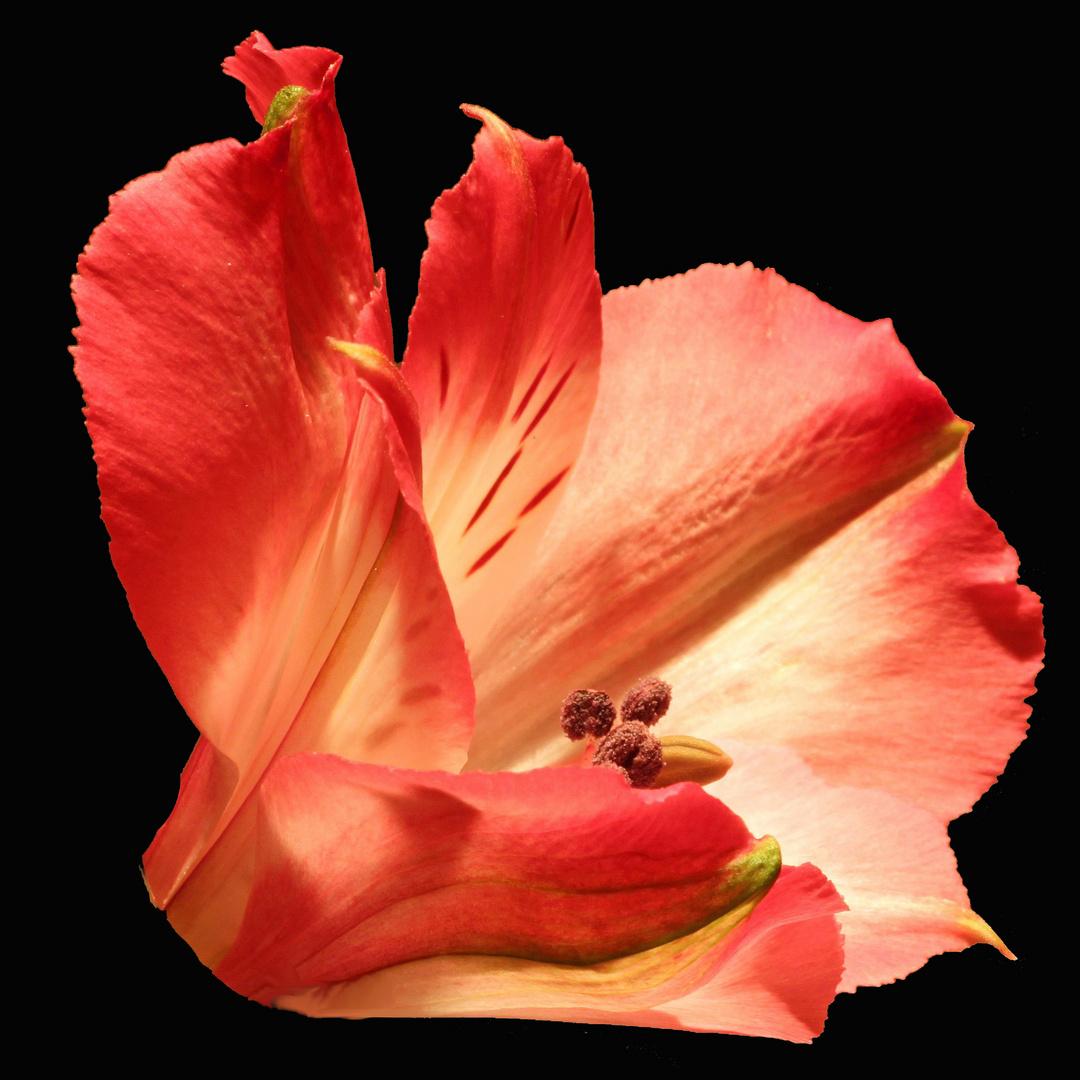 wenn Blüten leuchten