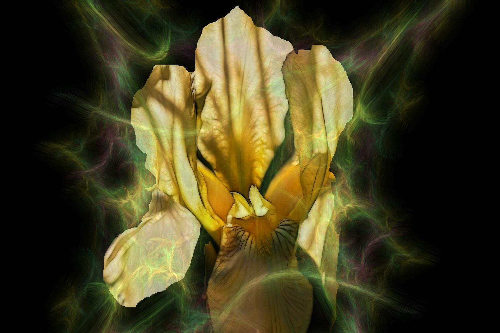 Wenn Blüten träumen