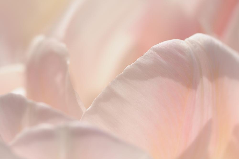 ... wenn Blumen sprechen könnten ...