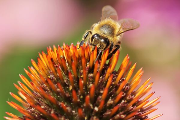 Wenn das Bienchen mit dem Blümchen