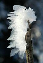 Wenn das Holz winterlich blüht