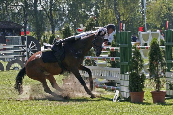 Wenn das Pferd nicht will...