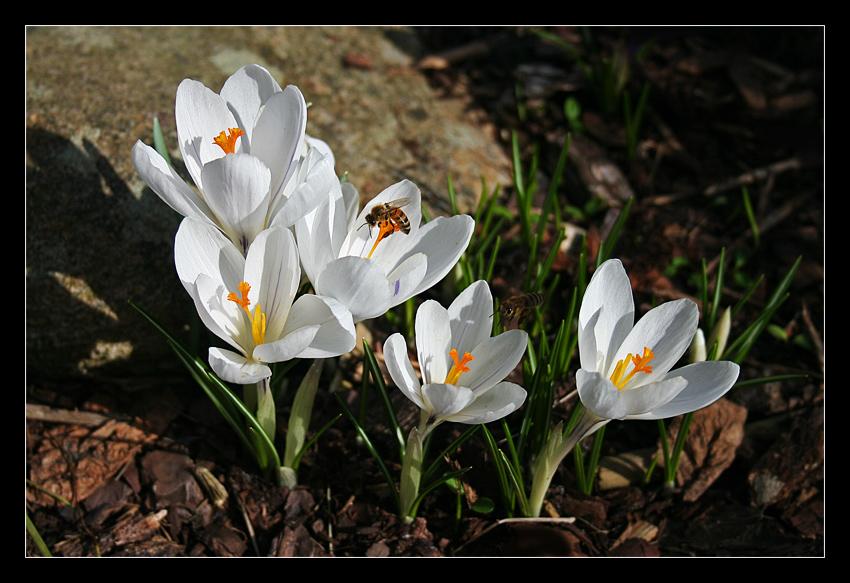 Wenn der Frühling....