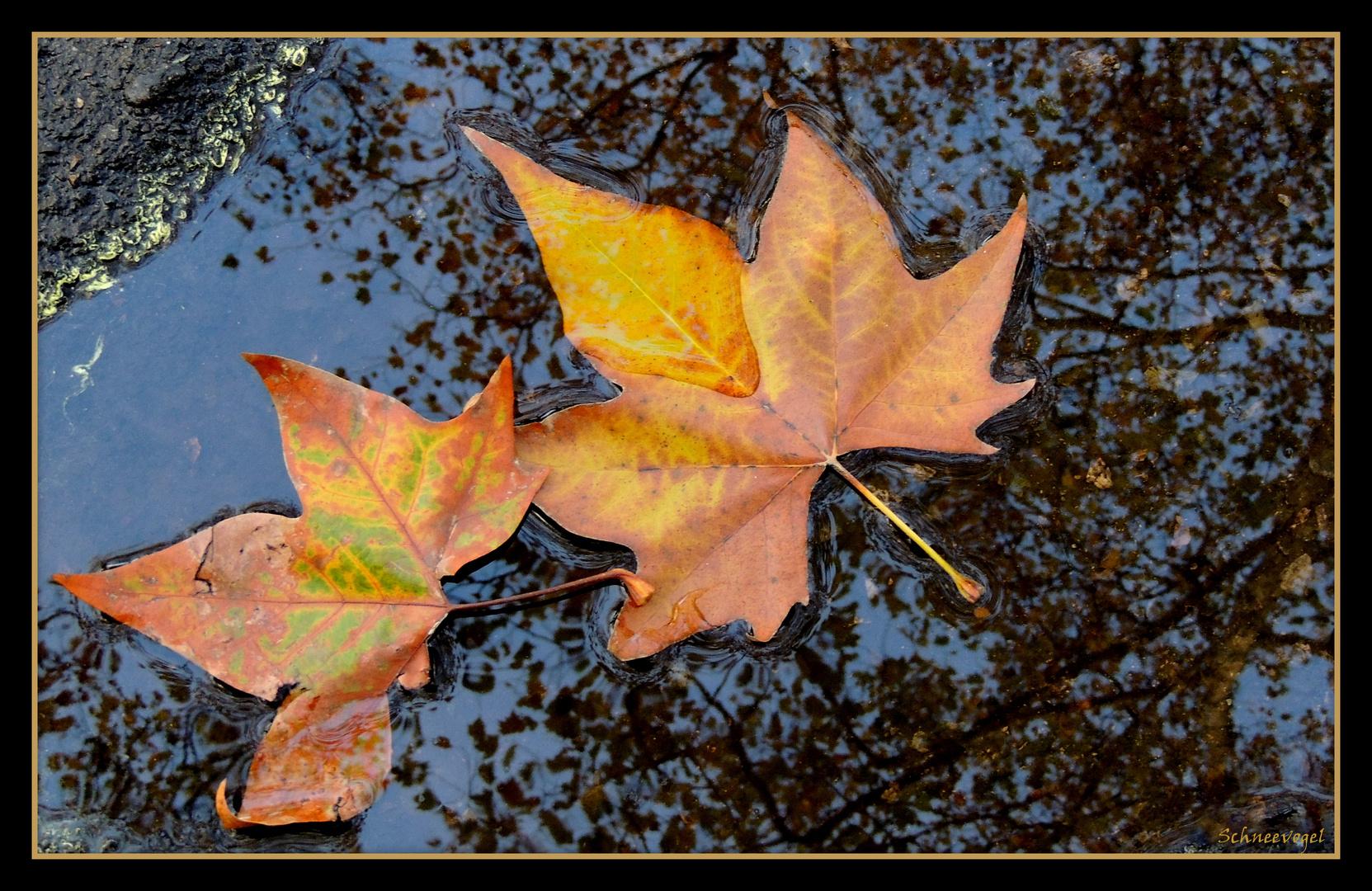 Wenn der Herbst ins Wasser fällt