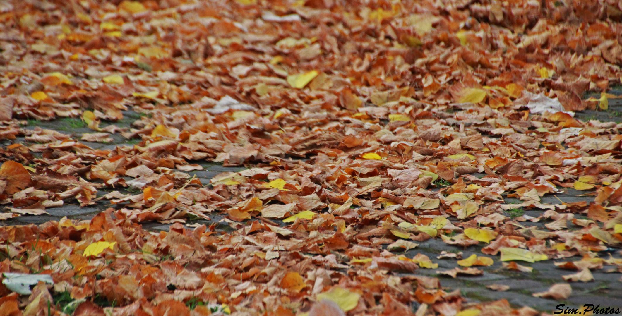 Wenn der Herbst kommt...
