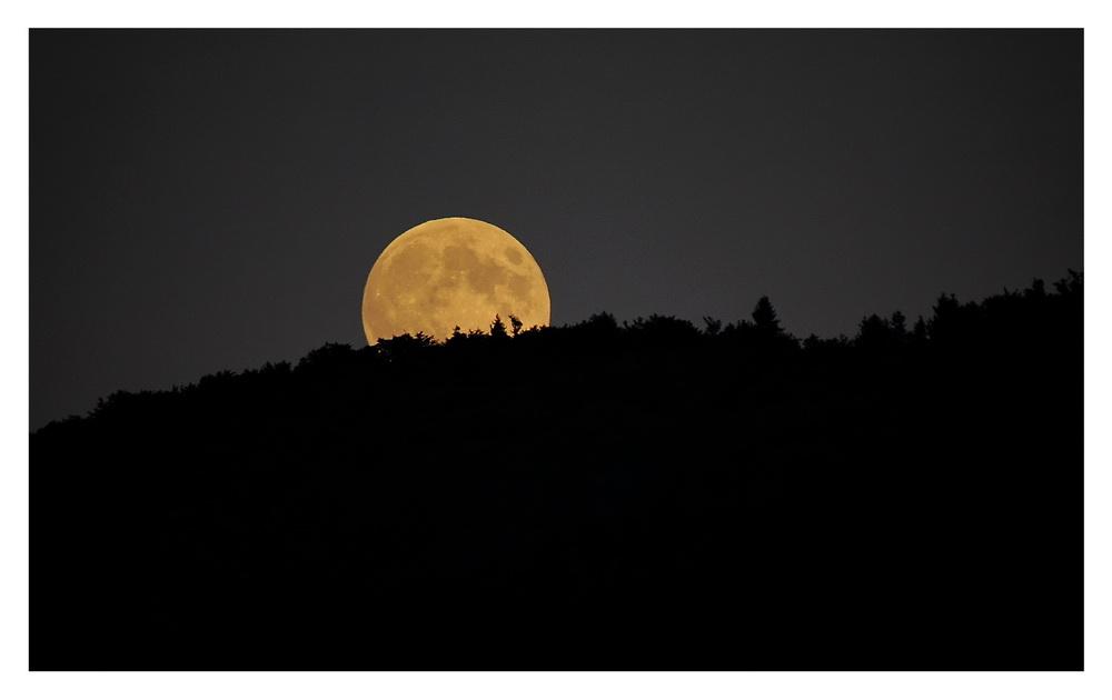 Wenn der Mond aufgeht....
