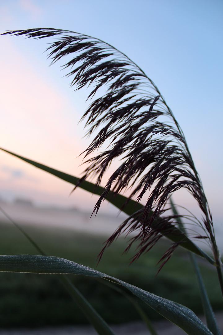 Wenn der Morgen die Felder belebt