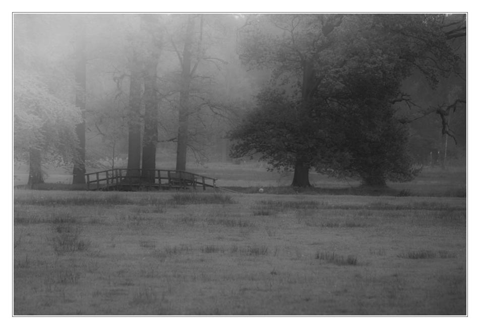 wenn der Nebel durch die Bäume wabbert