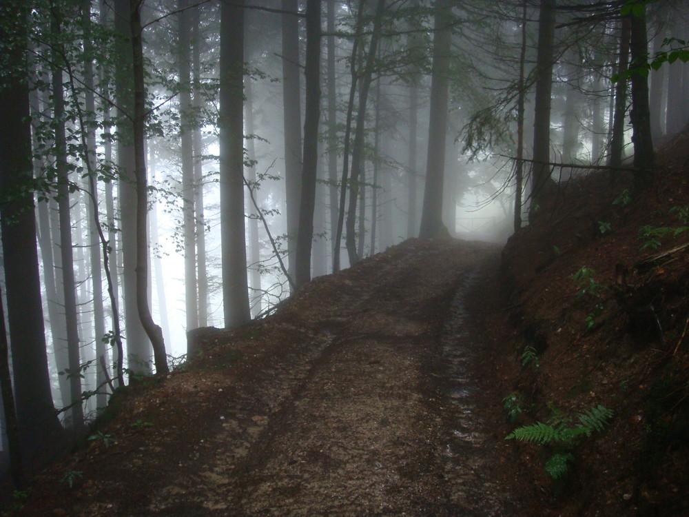 Wenn der Nebel im Wald ist