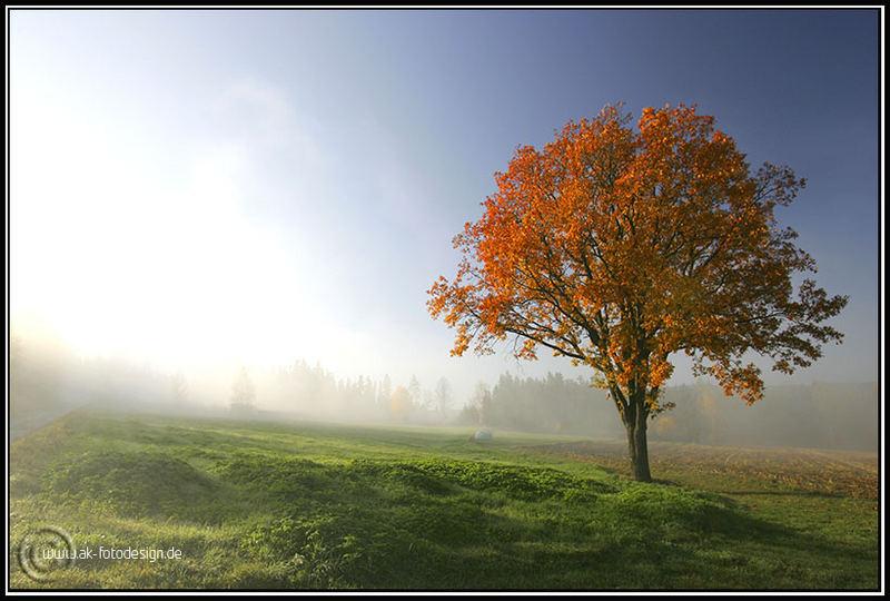 Wenn der Nebel kommt .....