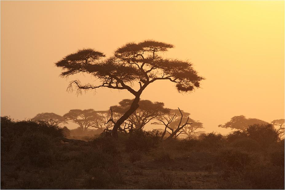 Wenn der Safari-Tag zu Ende geht....II