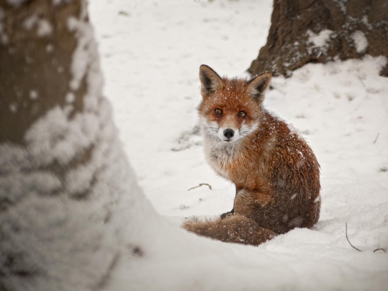 wenn der winter zu kalt wird foto bild tiere wildlife s ugetiere bilder auf fotocommunity. Black Bedroom Furniture Sets. Home Design Ideas