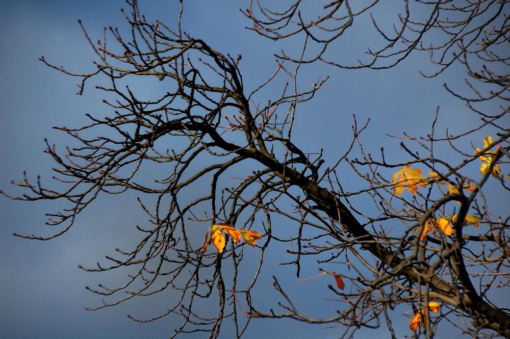 Wenn die bl tter fallen foto bild pflanzen pilze flechten b ume laubb ume bilder - Garten baum fallen ...