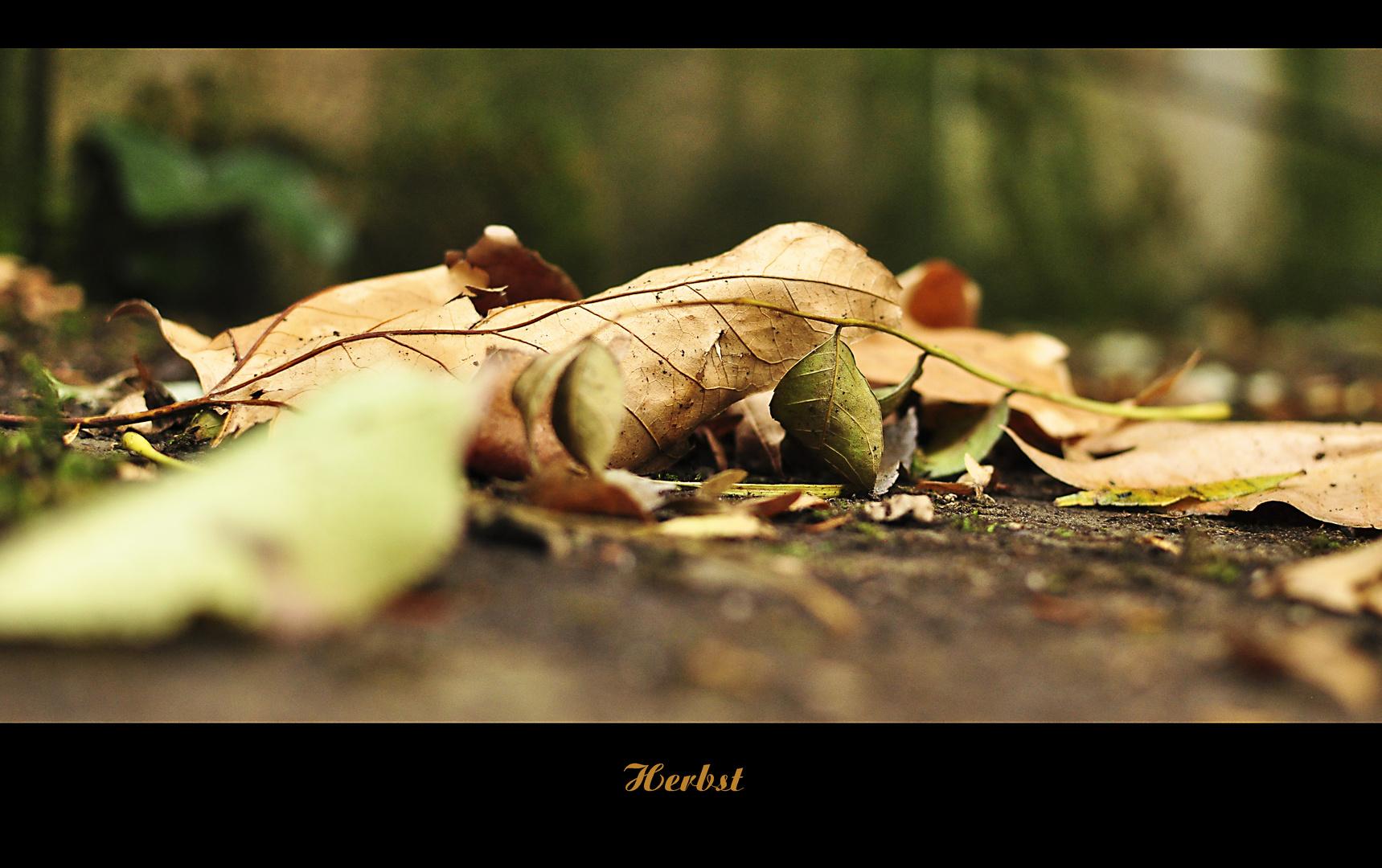 Wenn die Blätter fallen