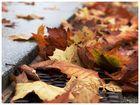 Wenn die Blätter fallen...