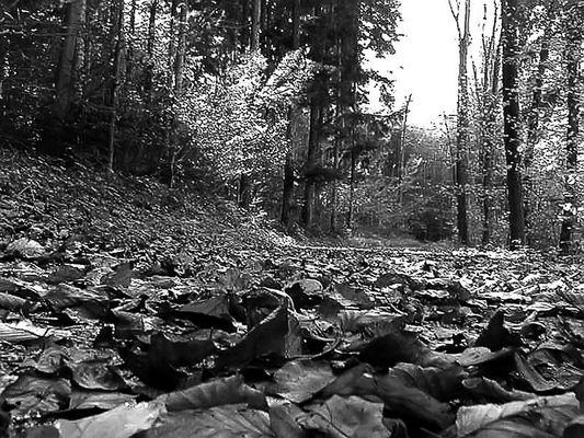 ..wenn die Blätter leise fallen..