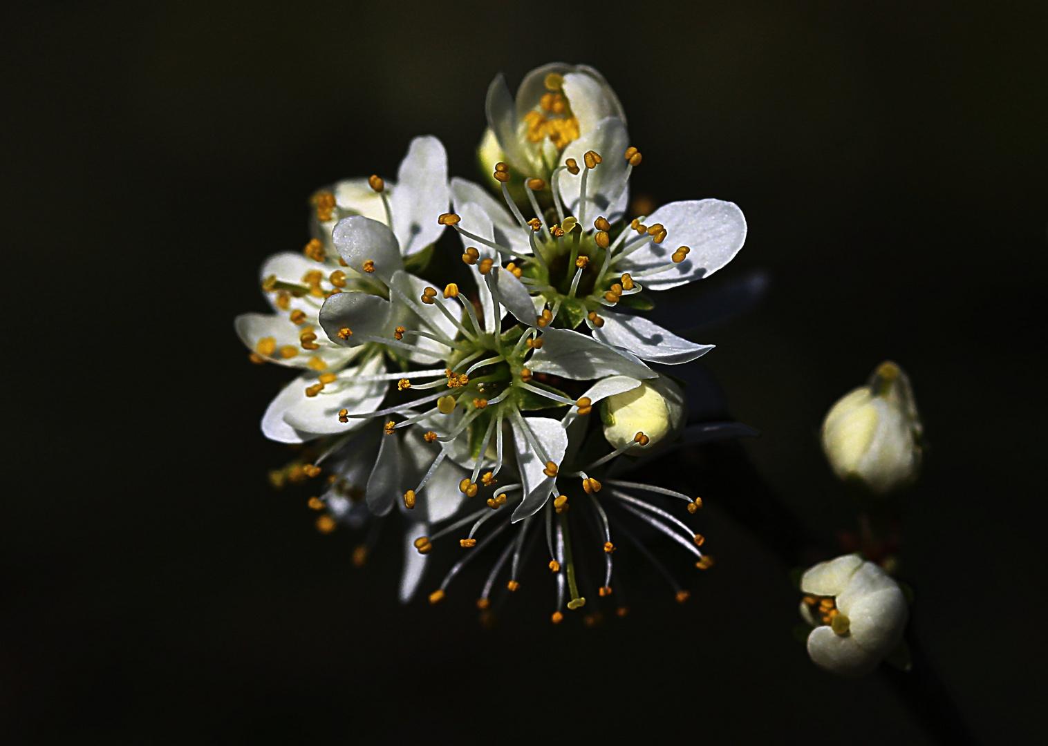 Wenn die Blüten blühen !
